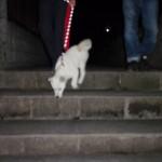 この階段下りられるかな?