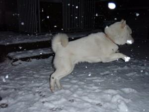 雪の日のホク