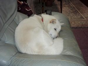 ソファーで眠る北斗