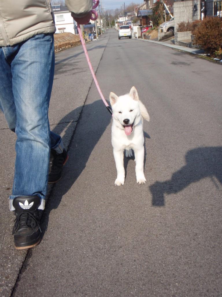 楽しいねお散歩!
