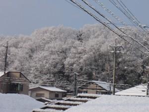 今年は雪が少ないな