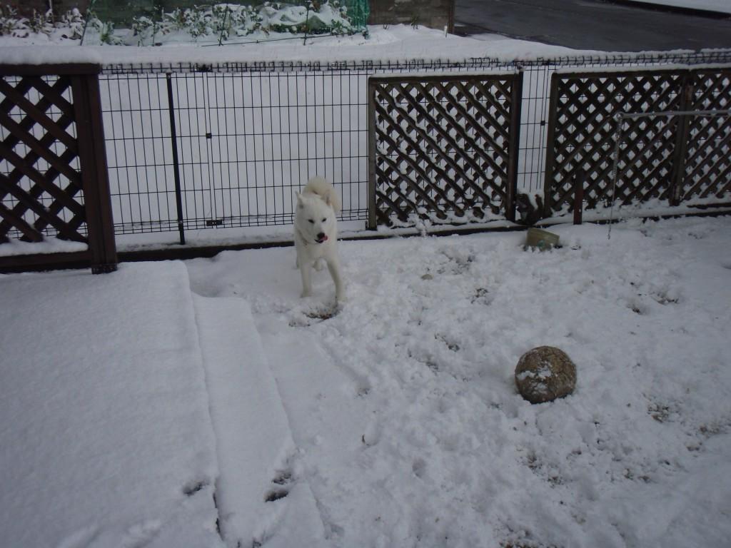 雪の日の宗