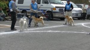 成犬第一 牡組