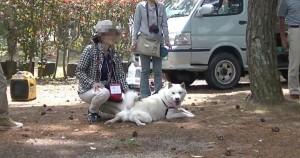 北海道犬 遼君