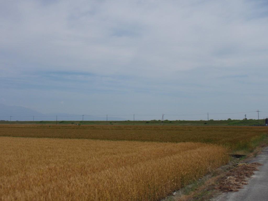 麦秋の近江路