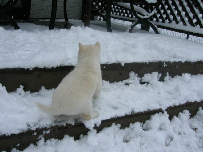 北斗が来た次の日は雪