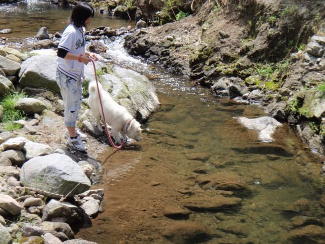 川で遊ぶ北斗