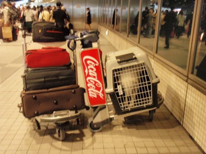 帰り千歳空港