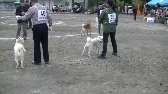 成犬第1牡 蒼勇