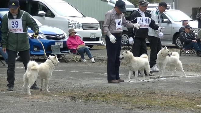 成犬第1牡組