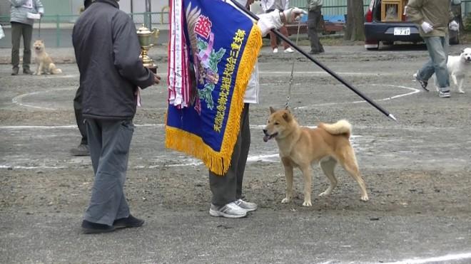 成犬第2牡組 全犬優勝