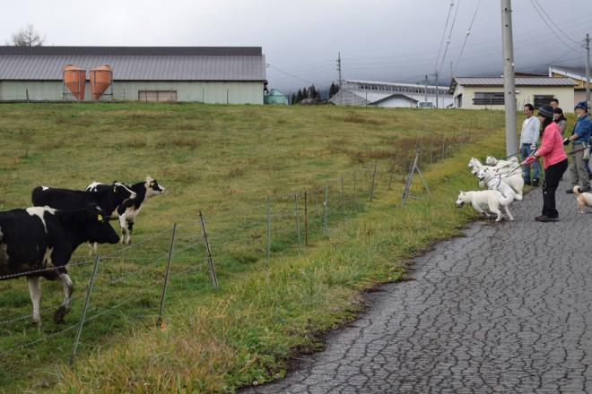 牛さんに興味!