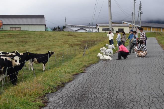 牛さんが近づいてきます