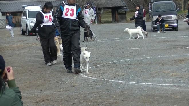 成犬第一牝組