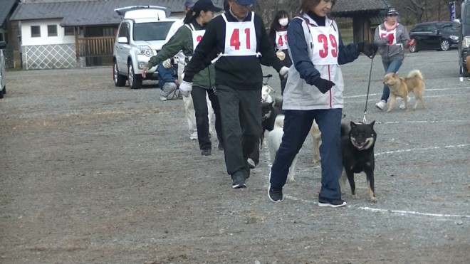 成犬第二牝組 比較審査