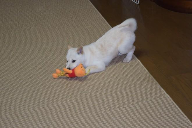 おもちゃで遊ぶみゆ