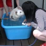 水浴びみゆ