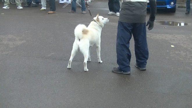 全犬優勝 キバ