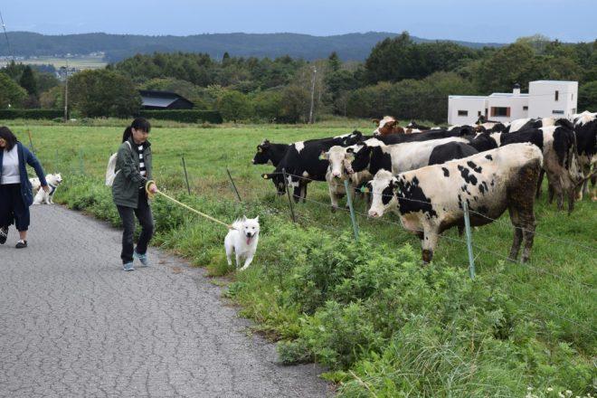 牛さんとご対面