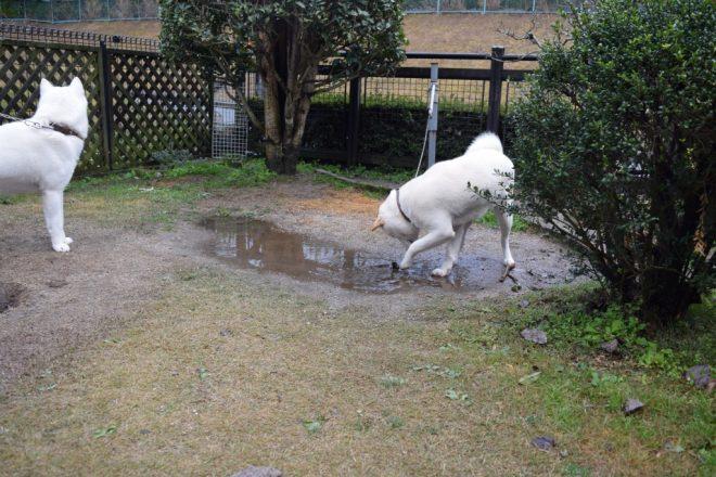 水遊びかな