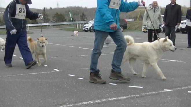 成犬第二牡組比較審査