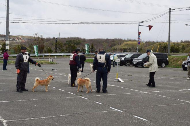 子犬牡組 個体審査