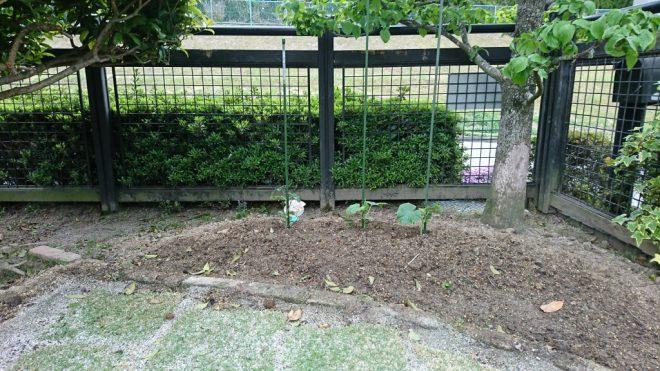 花壇には、野菜が