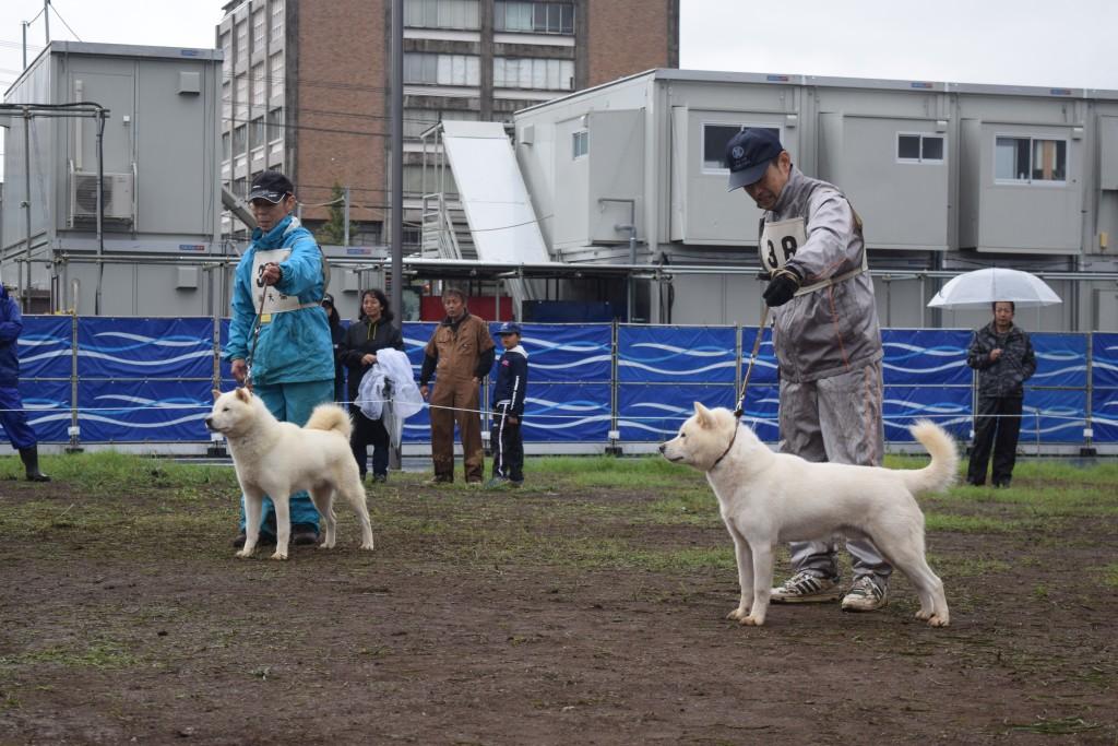 成犬第二牡組