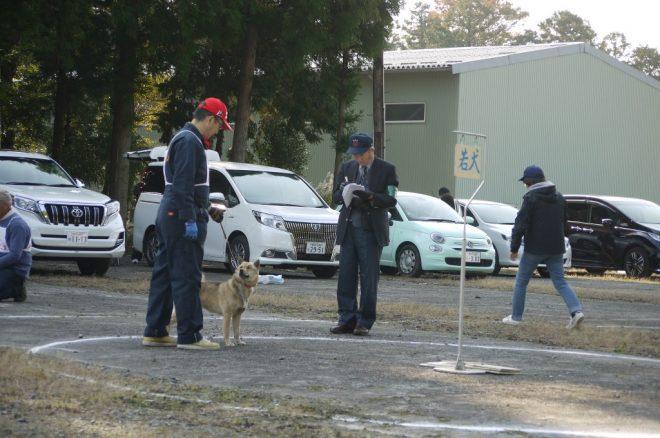 若犬牝組 壱与:札幌菊地犬舎