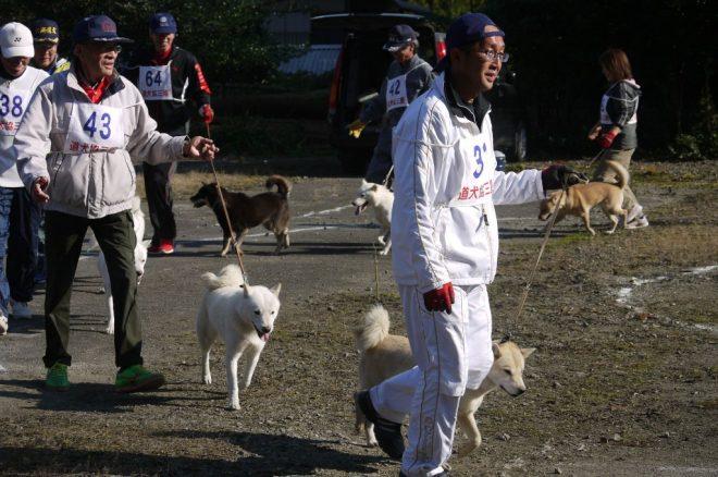 成犬第二 牝組