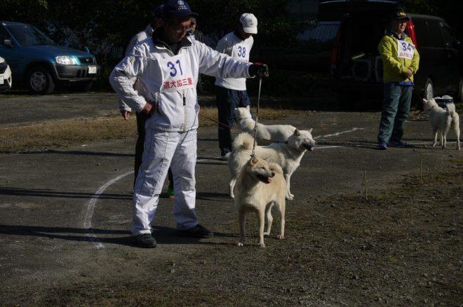 成犬第二牝組