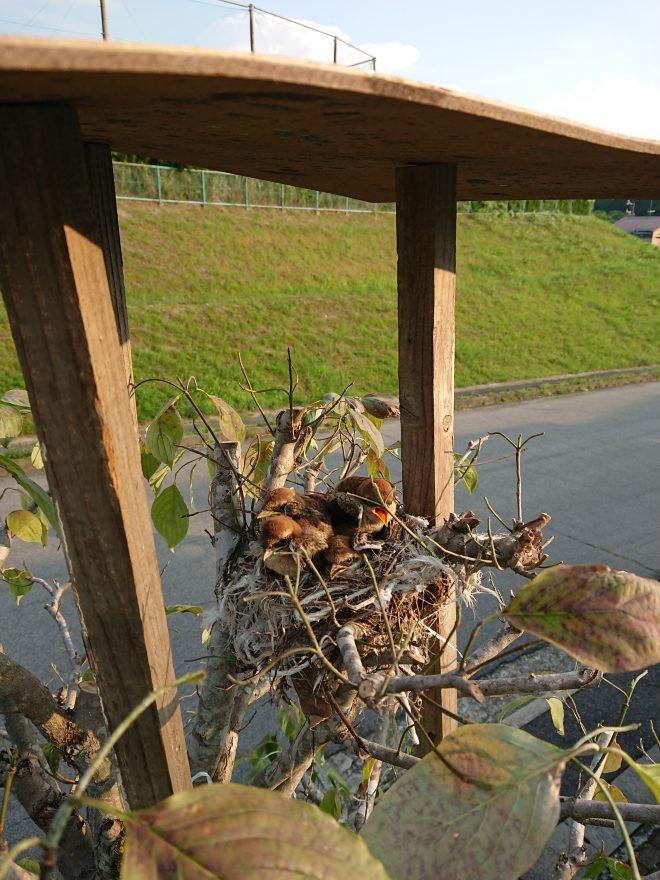 屋根の付いた巣